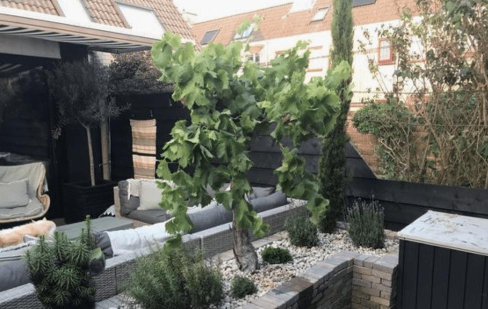Beplanting doet heel veel voor een stoere tuin