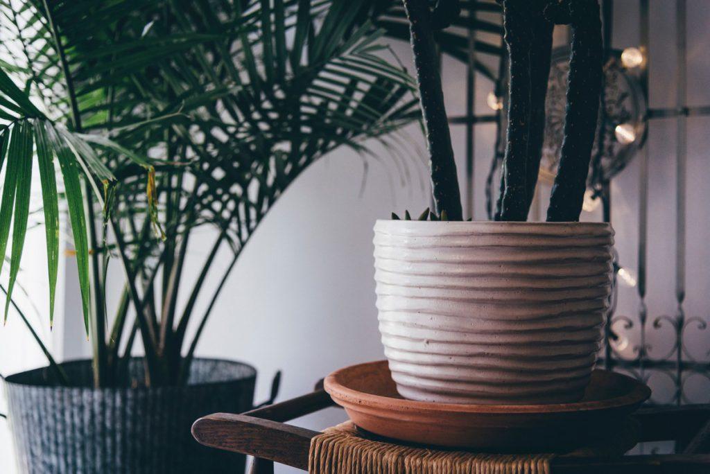 planten in een mannen interieur